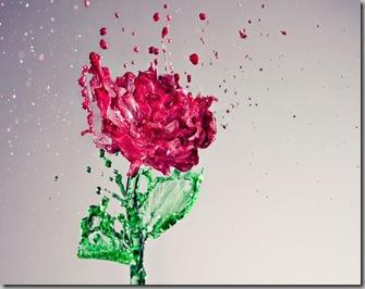 Uma rosa que sonha