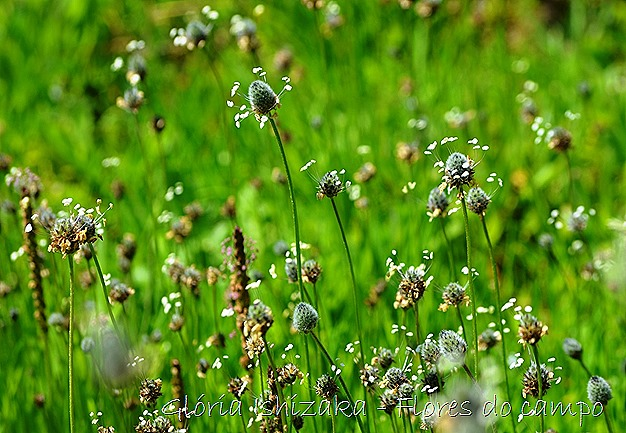 Glória Ishizaka -flor  14.1
