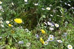 Wildflowers fill the desert