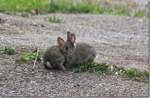 4 easter-bunnies