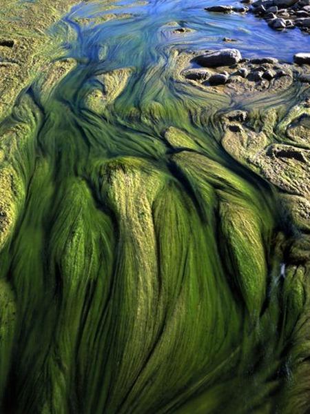 freshwater-rivers-rio-grande-2_45153_600x450