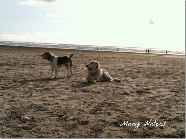 Many Waters Beach Puppies