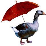 duck_w.JPG