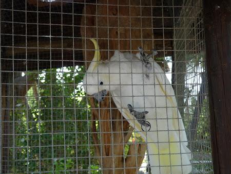Gradina botanica: papagali