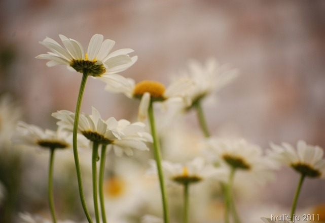 Fleur17