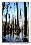 【說好的水漾森林呢來嘍】和阿婷小妹一起來欣賞這有保存期限的美景叭^^感謝大自然的鬼斧神工~