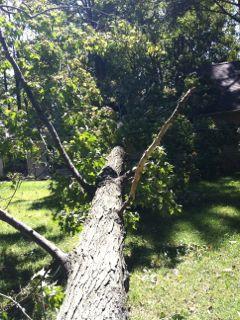 downed tree sm.jpg