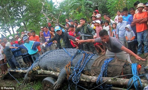 Villagers capture world's largest crocodile (which weighs one ton and is 21ft long) 02