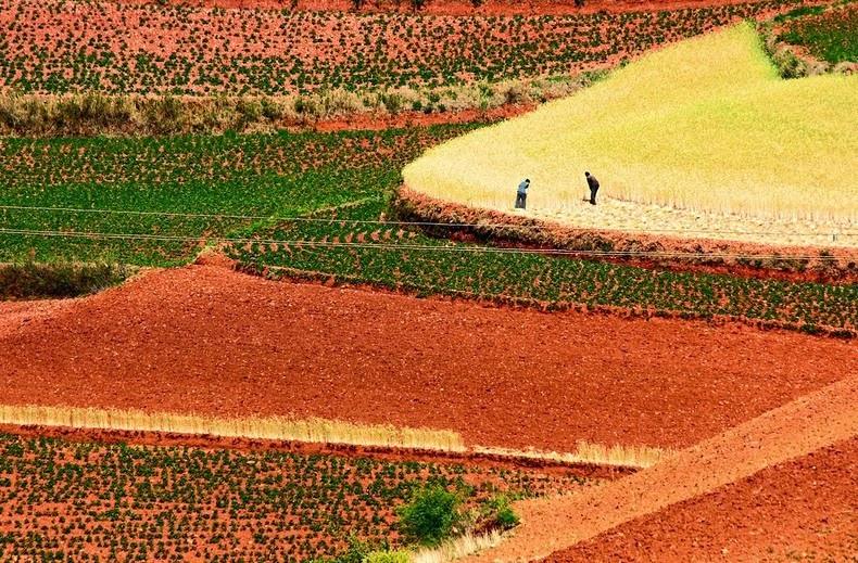 dongchuan-red-soil-11