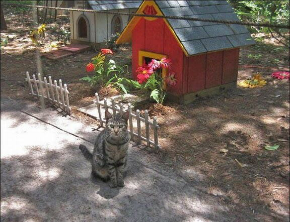 Caboodle Ranch : Sanctuary for homeless cats by Craig Grant