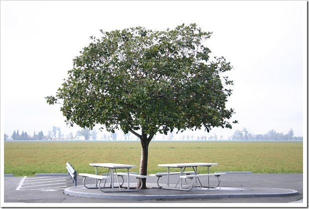 041204_tree