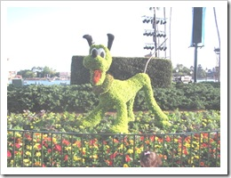 Florida vacation Epcot topiary pluto