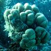 koral_29.jpg
