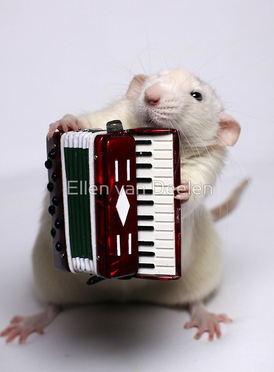 rat-musicians-006
