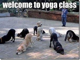 Funny_dogs_yoga_class_share_on_facebook
