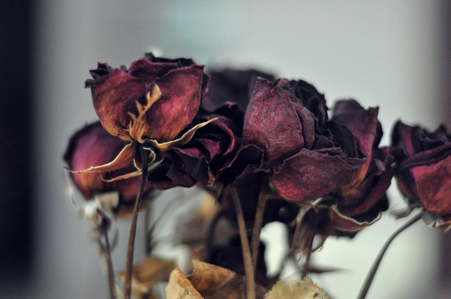 how to keep cut roses longer