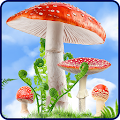 Free Mushroom HD Live Wallpaper APK for Windows 8