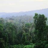 写真3 SPF社コンセッション内の保護区の一つBukit Jugan: Binyo川の源頭部に位置する。SPF社はコンセッション内の3割近くを保護地区としているが、その多くは調査がされていない。 / Photo3   Bukit Jugan, one of conservation areas in SPF concessions: nearly 30% of the concession land is designated conservation areas but most of them remain uninvestigated.