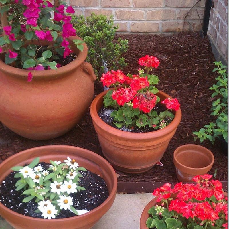 How I Clean My Terracotta Pots.