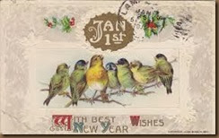 happy new year birds