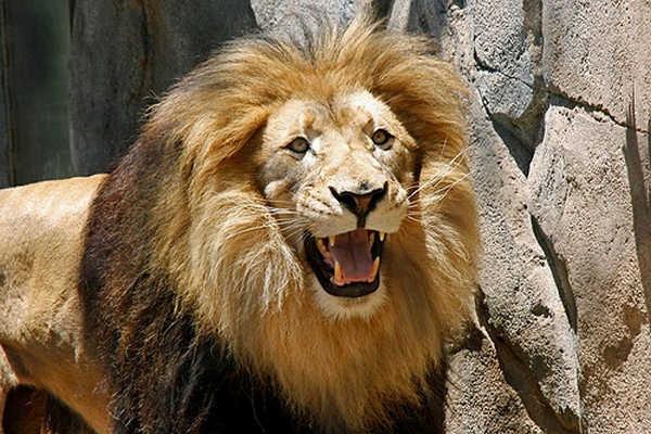 Animais tambem sabem rir 3