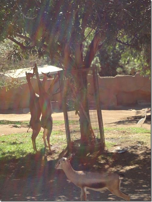 SD Zoo 036