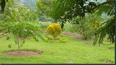 Ali's garden 005
