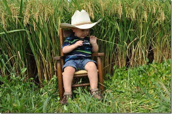 Trenton Rice Field