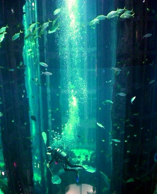 Cylindrical Aquarium 06