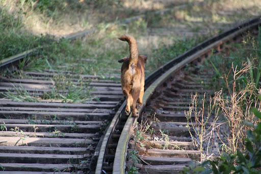Dogs make much better time than I do on the tracks