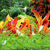 Colorful Plants At The Botanic Gardens - Roseau, Dominica