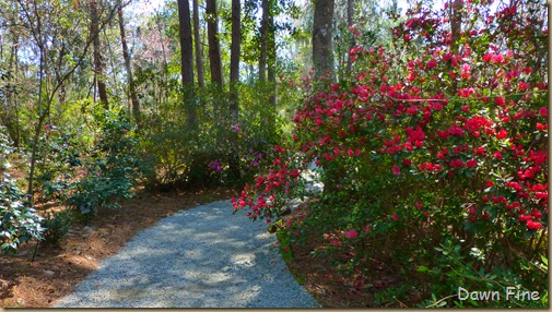 Magnolia Plantation_159