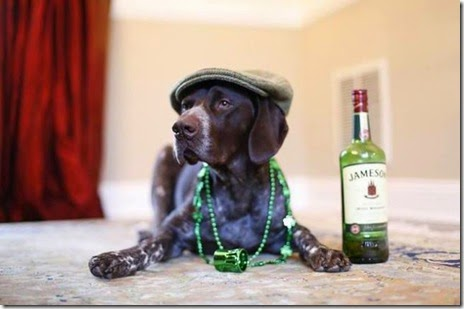animals-st-paddys-day-006