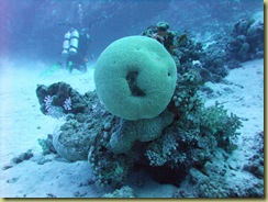 Smiling Coral