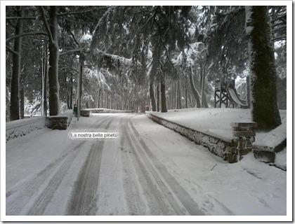 pineta con neve