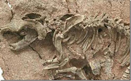 fosilesdinosaurios06