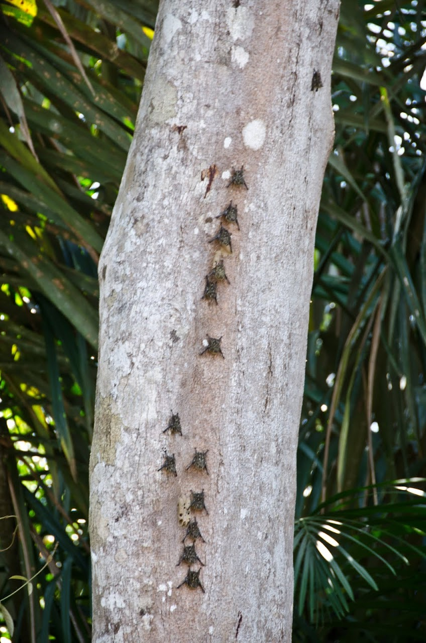 Bats in Costa Rica