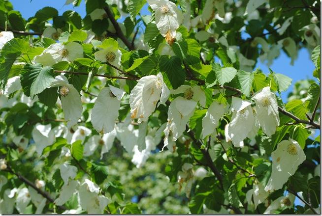 Botanisk have 2011 024