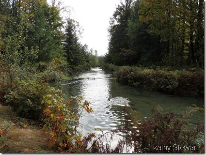 Spawning creek