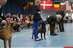 20130510-Bullmastiff-Worldcup-1311.jpg