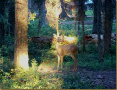 deer at lake of the woods