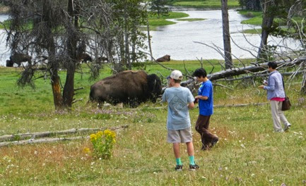 BisonSightings-18-2014-07-30-21-17.jpg
