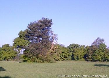 woodland1-1