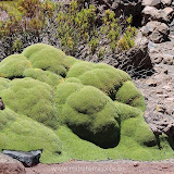 Arica - Parque Nacional Lauca  (5 de 10).jpg