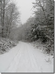 snowy Saturday 06