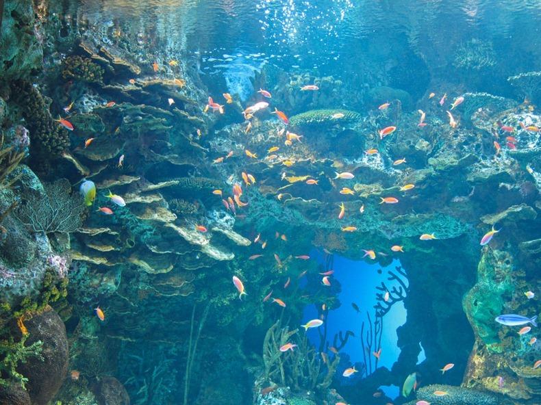 georgia-aquarium-14