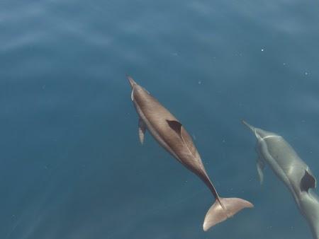 26. Delfini langa Muscat.JPG