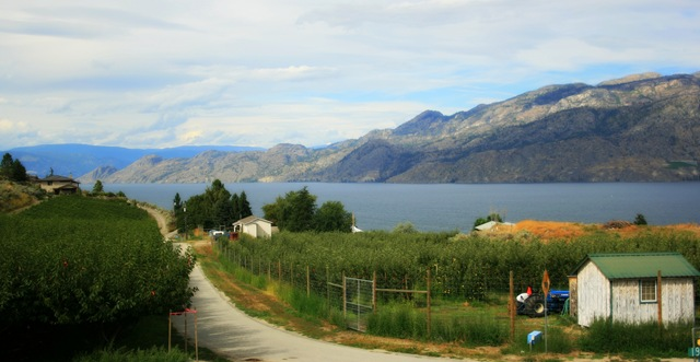 Orchard & Vineyards by Lake Okanagan