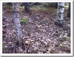 woodlandplace