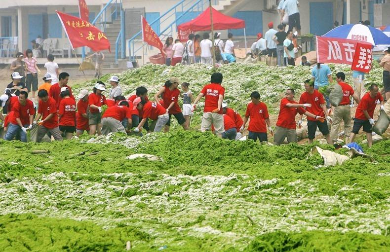chinese-algae10
